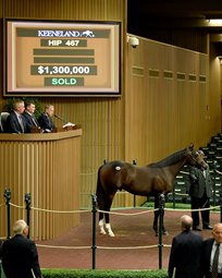 Thoroughbred Sales Consignors Four Star Sales
