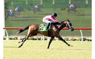Four Star Grad Monster Bea Wins Oceanside Stakes