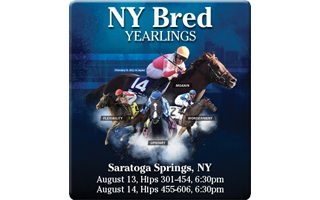 Saratoga NY Bred Preferred Yearlings